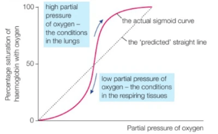 The oxygen dissociation curve is sigmoidal.