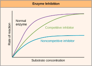 Graph distinguishing between competitive and allosteric inhibition