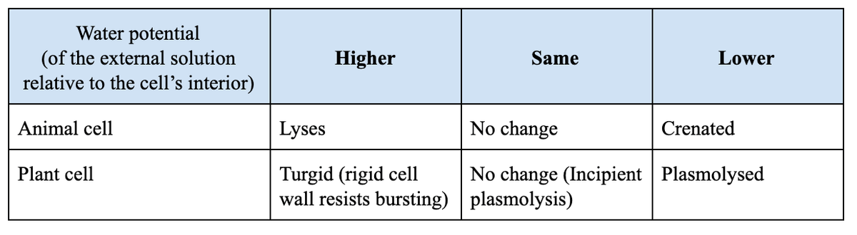 Effect of water potential differences on cells