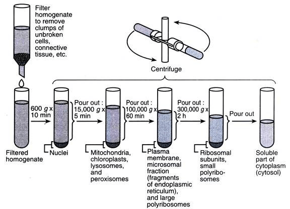 Ultracentrifugation