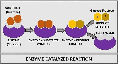 Process of enzyme catalysis