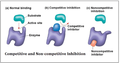 Competitive vs non-competitive inhibition - drawings