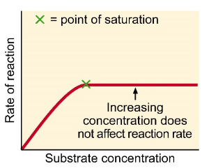 Effect of substrate concentration on enzyme activity