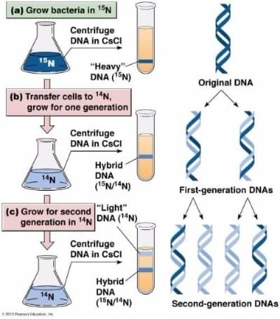 DNA replication experiment biology semi-conservative , tutte