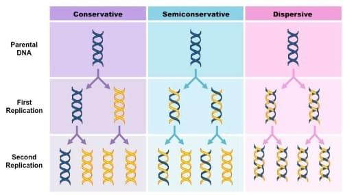 Semi-conservative, DNA Replication, Biology Experiment , Tutte