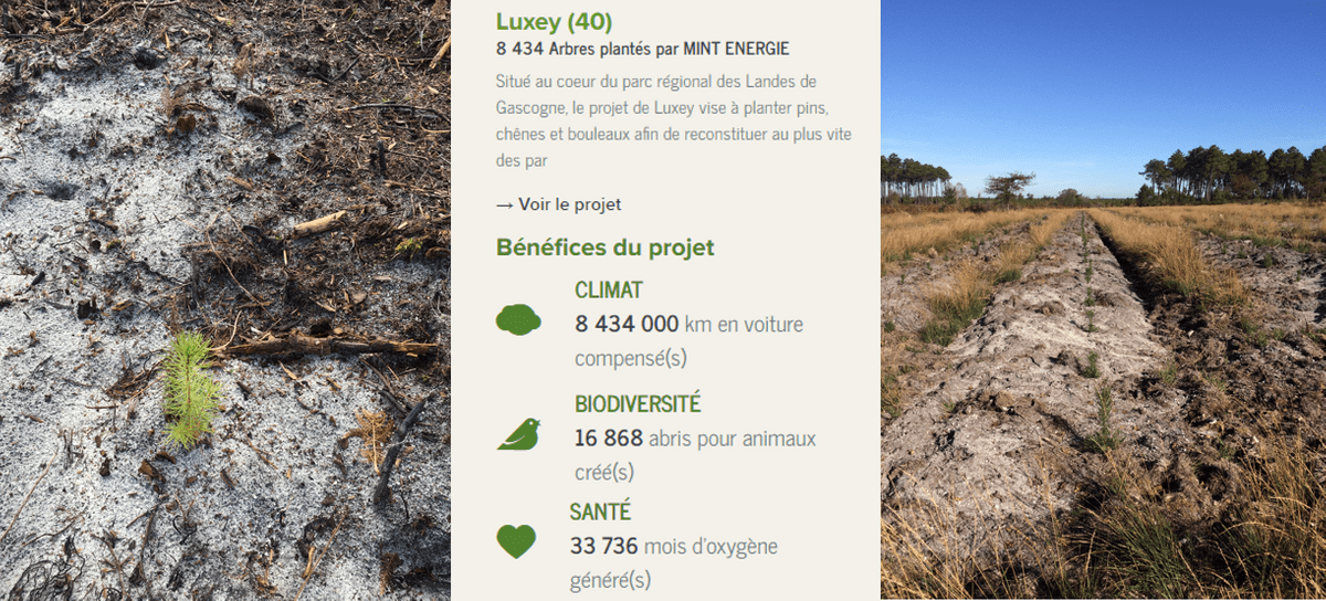Le projet Luxey