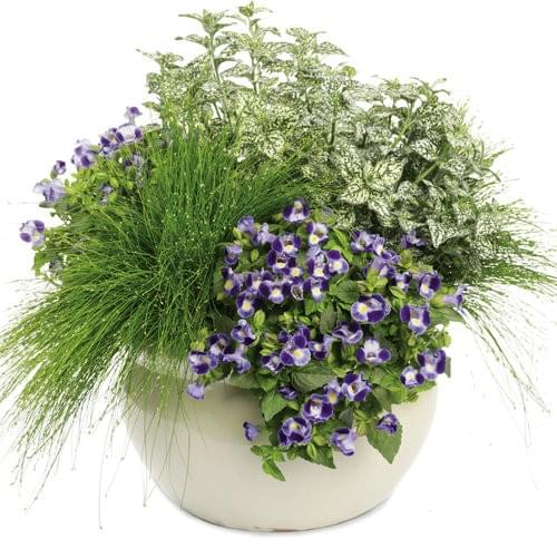 Proven Winners Heavenly Scent Fall Container