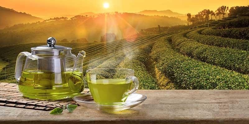Caffeine in Green Tea. What is Caffeine? Caffeine Health Benefits.