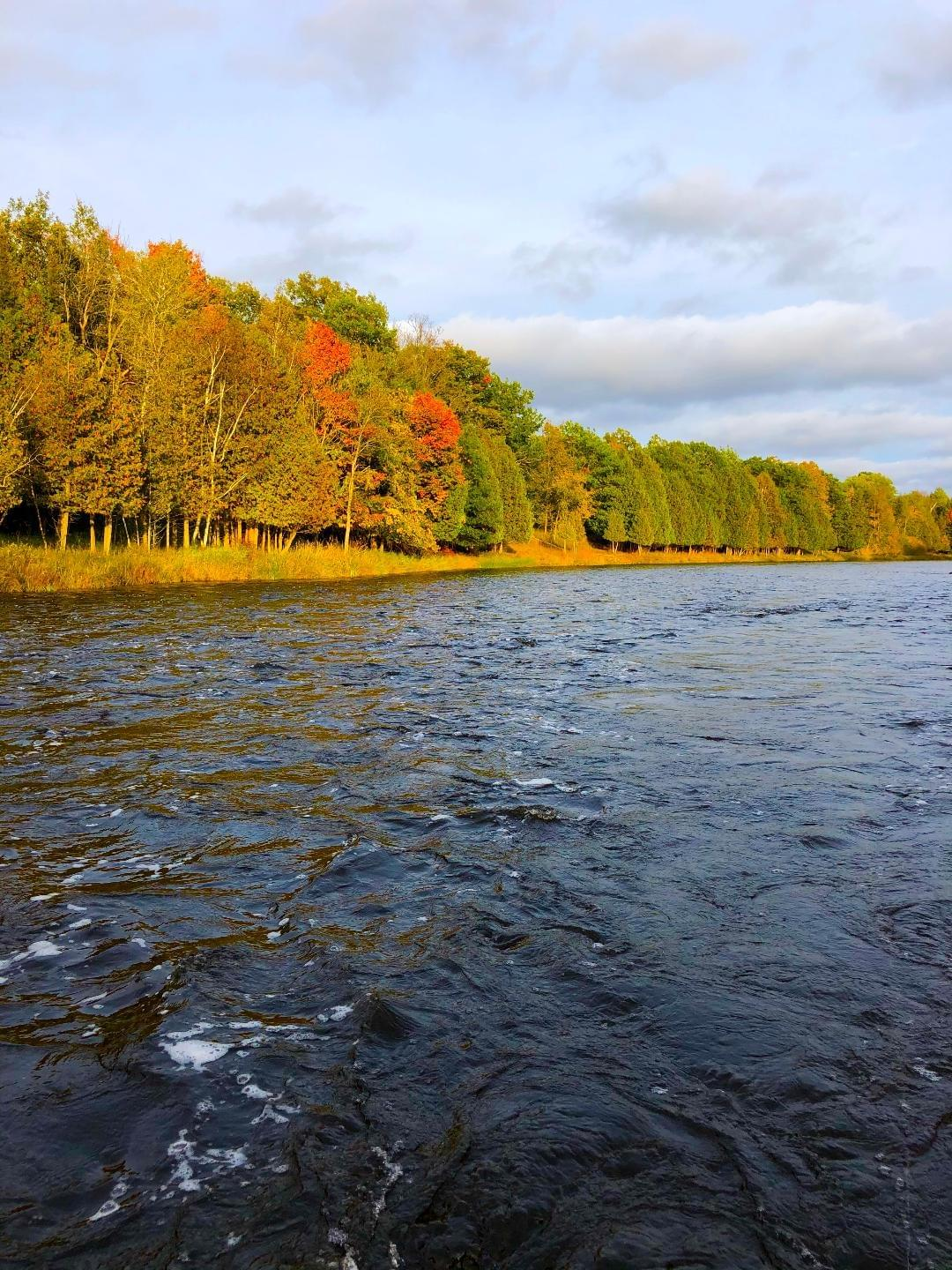 upper peninsula trout stream in the fall