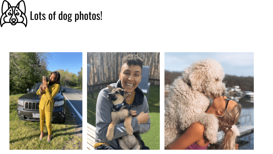 Lots of dog photos