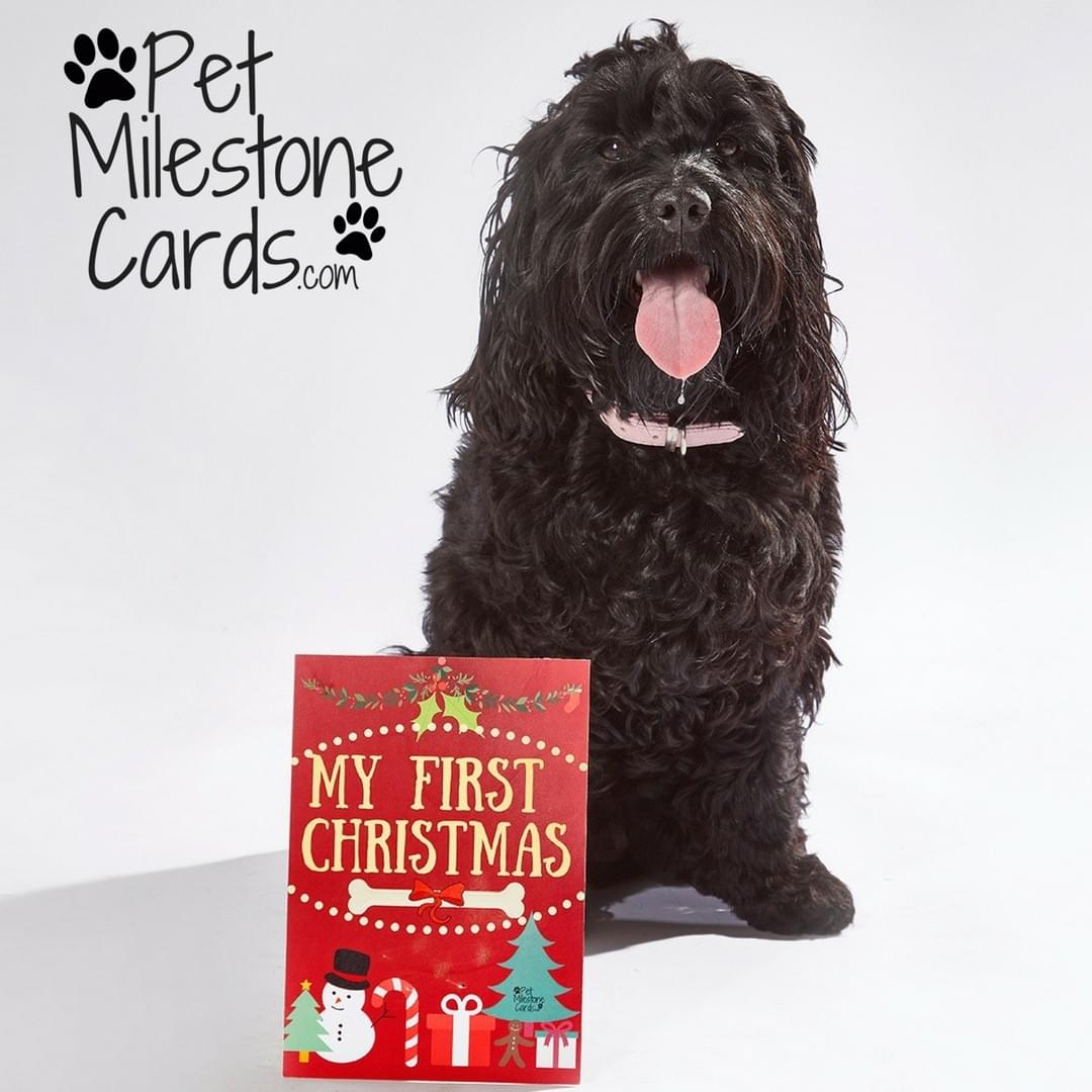 First-christmas-puppy-cards