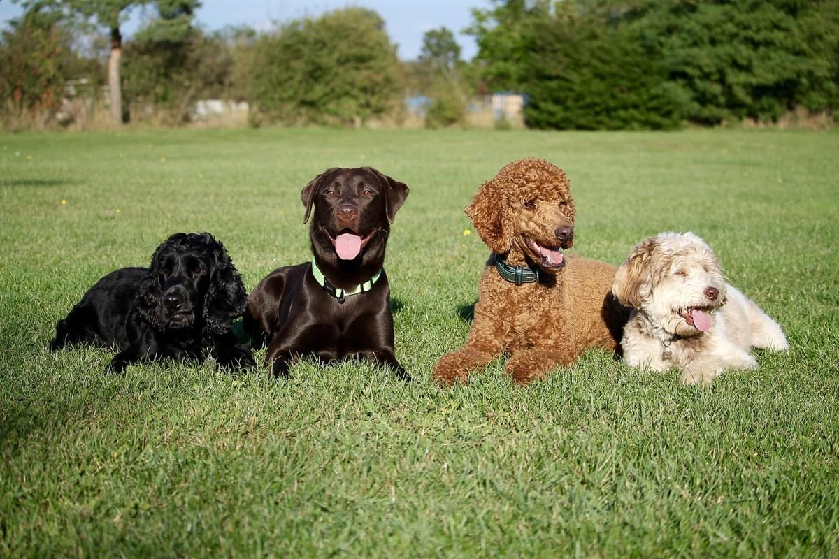CD Dog training Advanced course Wymondham Norfolk