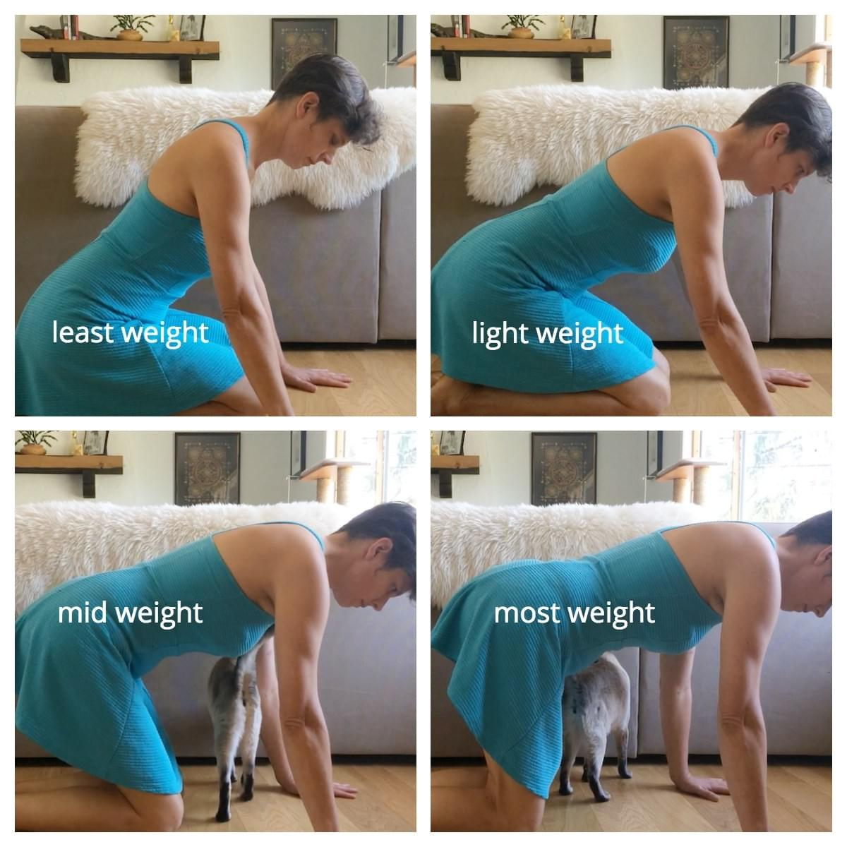 On all fours showing a progression of weight into the wrists starting with the bum resting back on the feet and the hands close to the knees and gradually adding more weight into the wrists by moving the hands further from the knees and lifting the hips off the feet till they are directly over the knees.