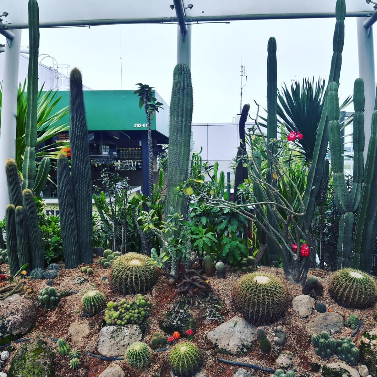 Cactus Garden at Changi International Airport, Make Most Of Your Transit Time At CHANGI Airport.