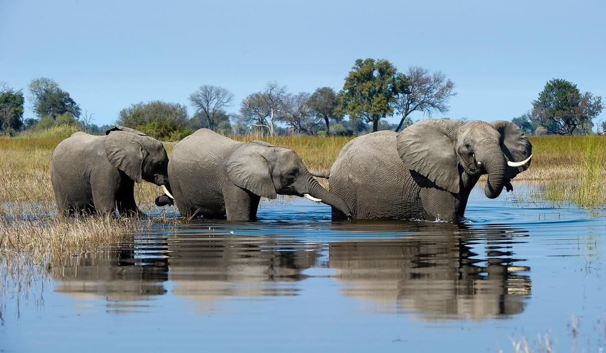 Elephants in Okavango Delta, Botswana