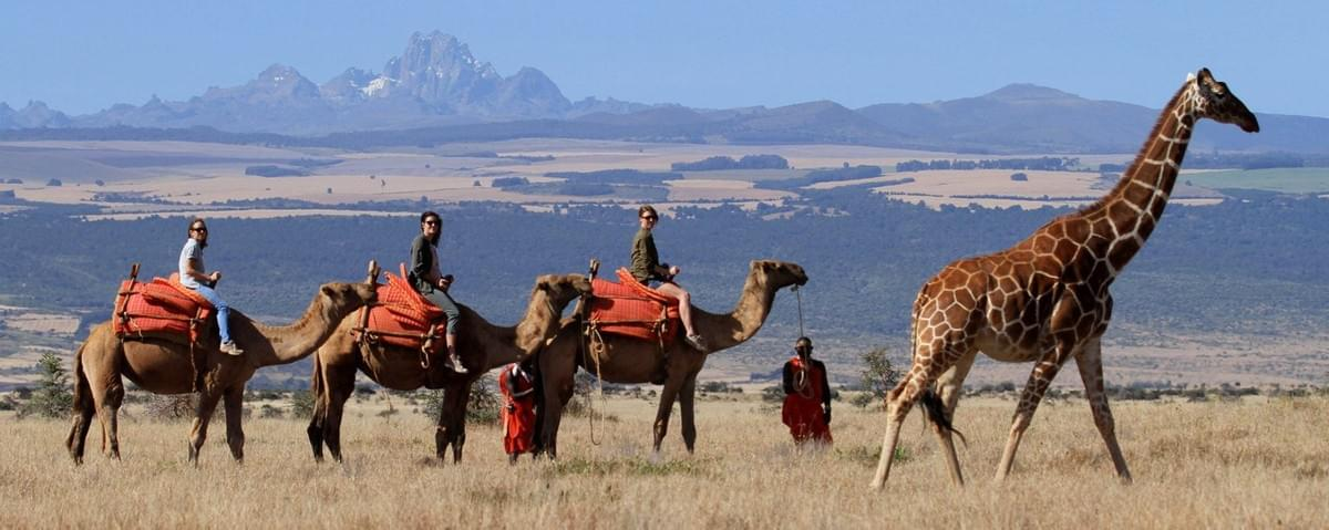Camel safari in the Laikipia Plateau led by the Laikipia Samburu out of Laikipia Rhino Camp