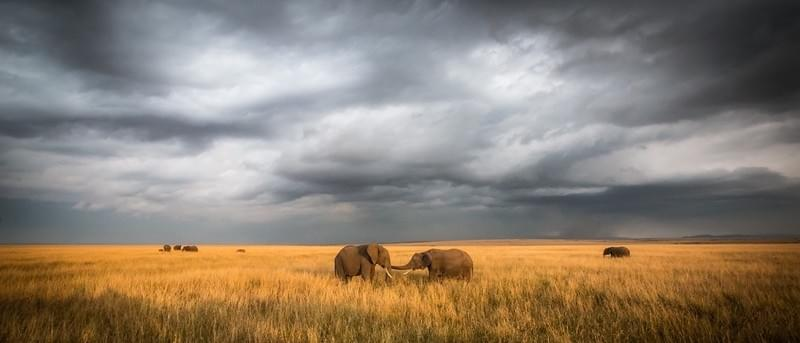 Elephants in Rift Valley Park, Maasai Mara, Kenya
