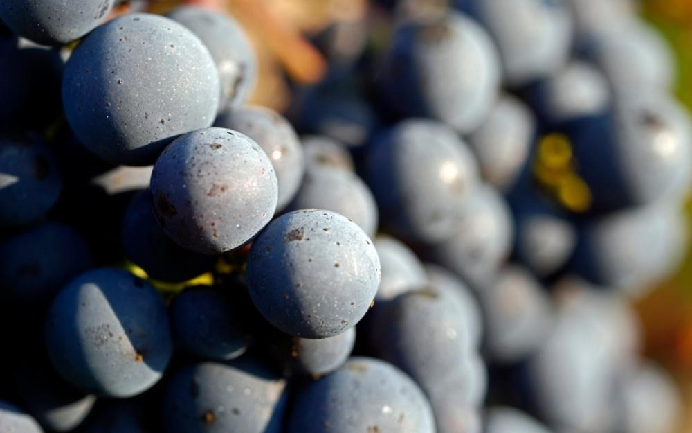 this organic grape could make a naked wine!