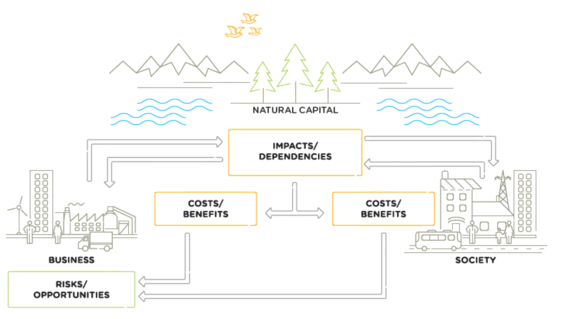 From the Natural Capital Protocol
