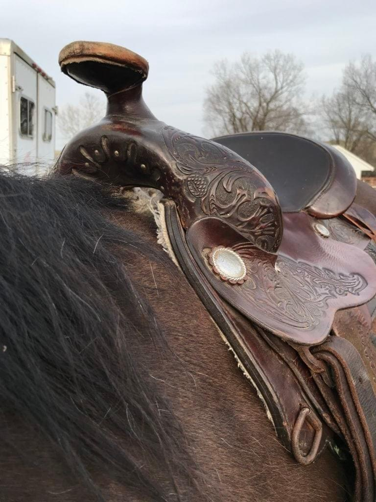 This Saddle is too Narrow for this Horse's Withers