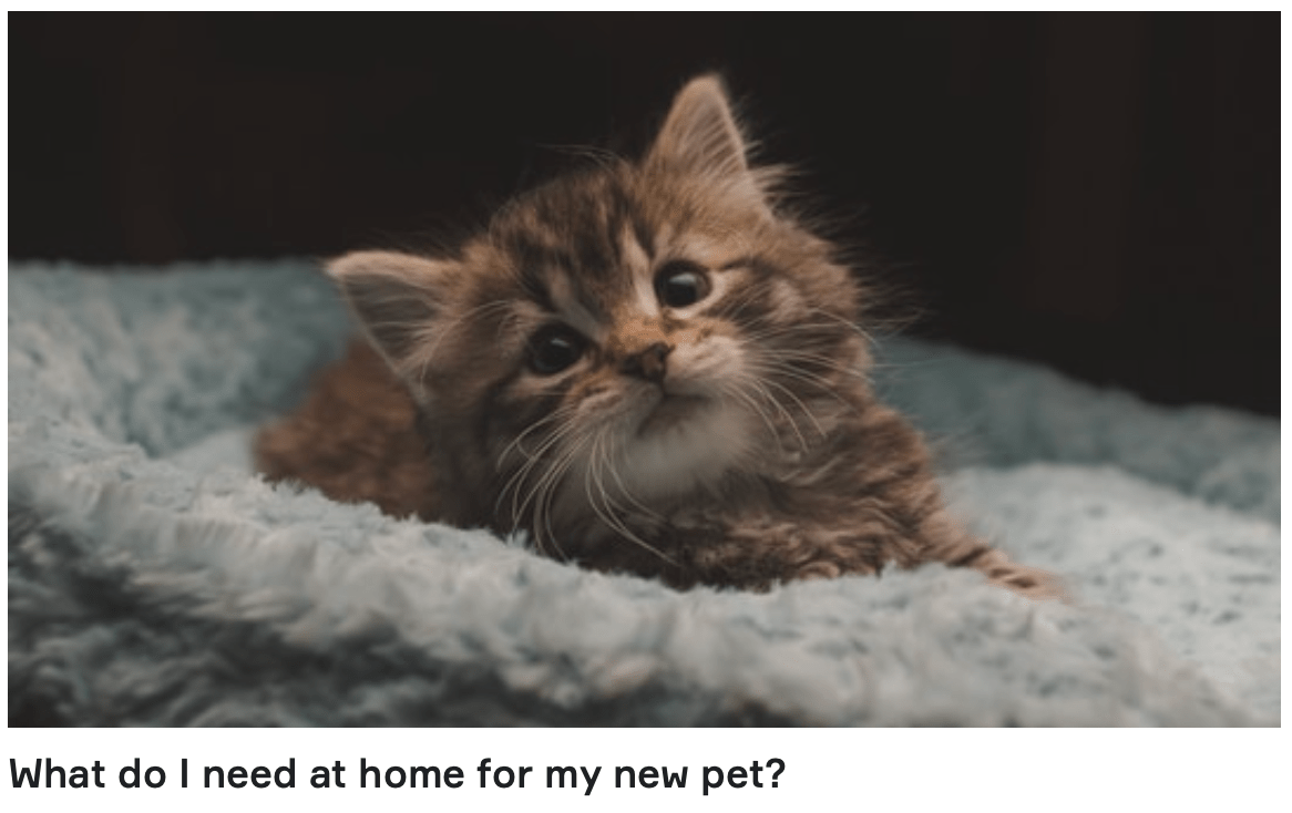 What do I need at home for my new pet? Home preparation for a new pet