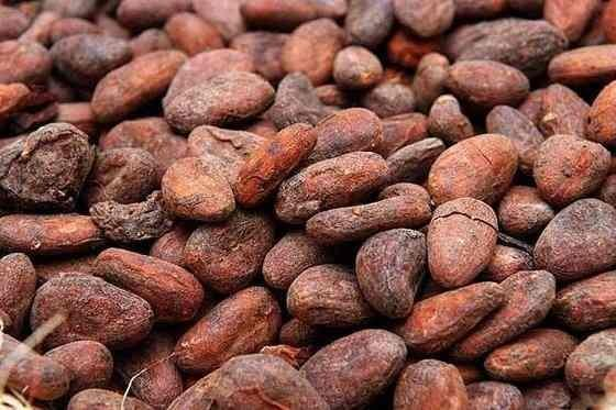 Cacao Raw Beans