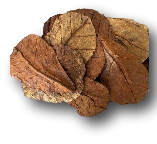 Indian Almond Leaves for Aquariums