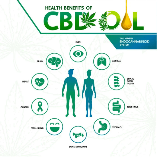 Benefits Of CBD Body-Chart