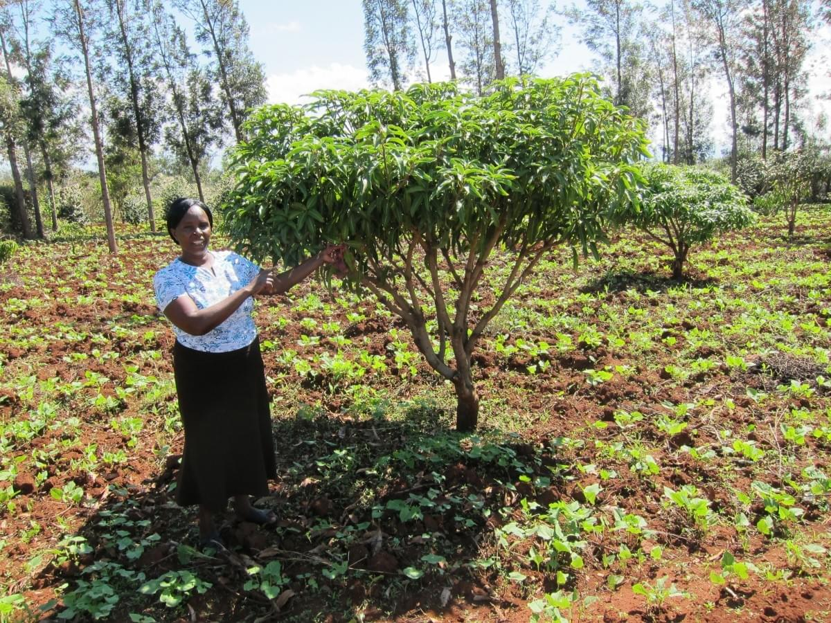 Jeniffer Kithure, TIST Farmer, in her garden with one of her trees