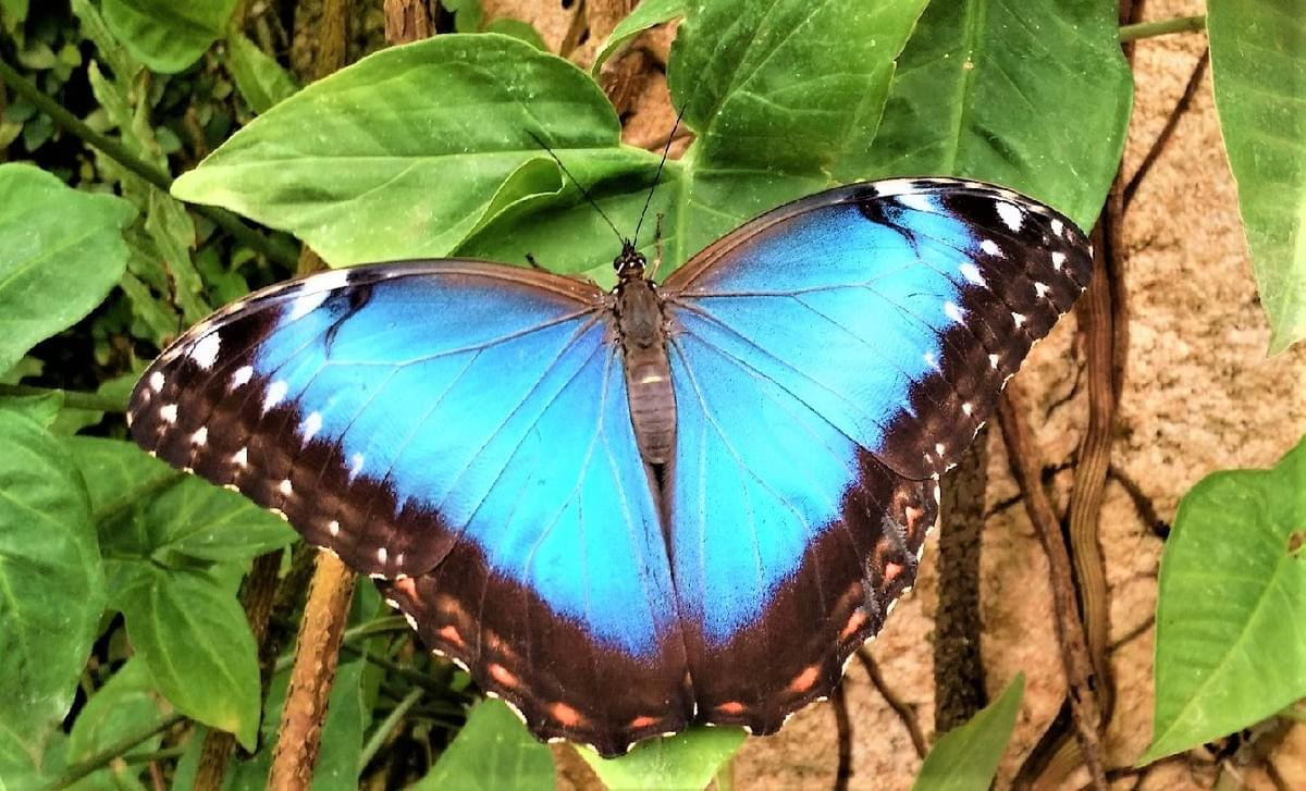 Things to do in Malaga with kids - Visit Butterfly Park