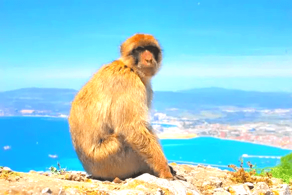 What to do in Gibraltar? See the apes