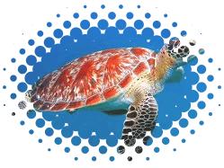 Image of red sea turtle