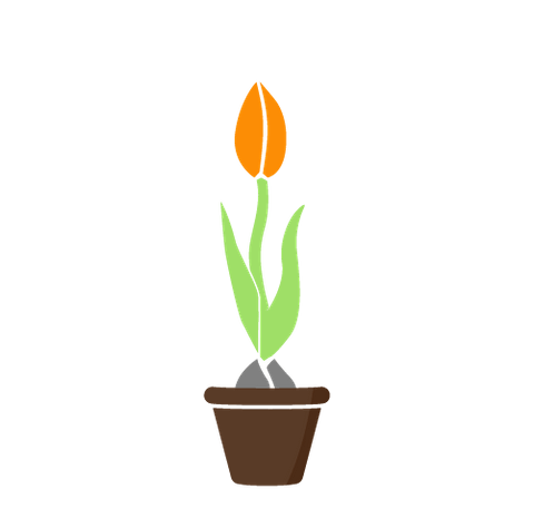 Small Business, growing tulip