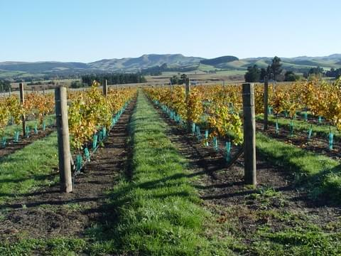 Waipara Fields Vineyard - Torlesse Wines