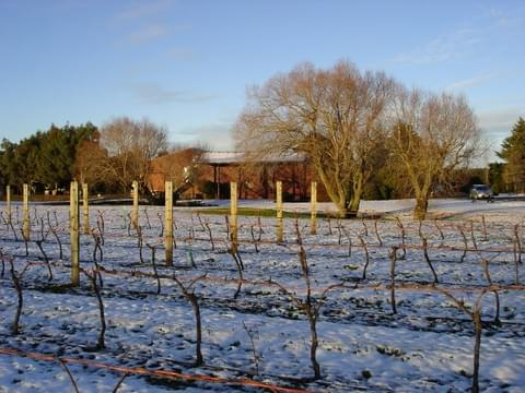 The  Winery Block Vineyard - Torlesse
