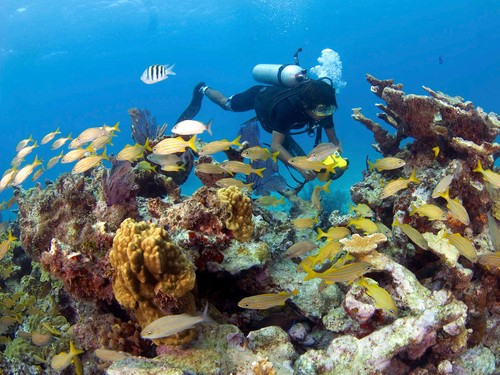 BUCEO / SCUBA DIVING (CERTIFIED AND LESSON)