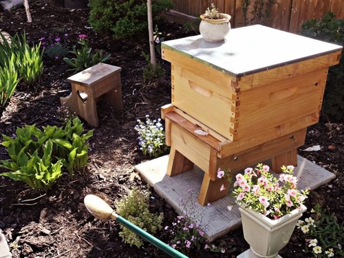 Sweet & Helpful Garden Honeybee Kit