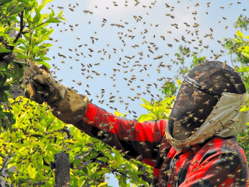 Swarm Removals