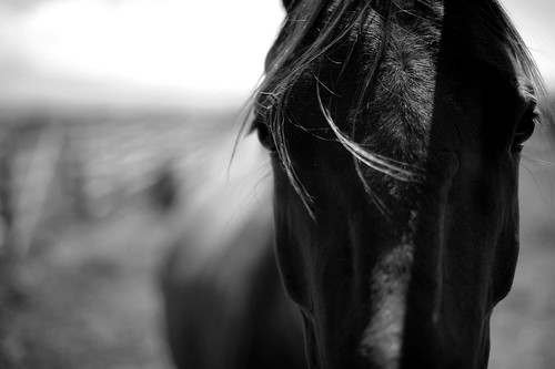 By Horse 2