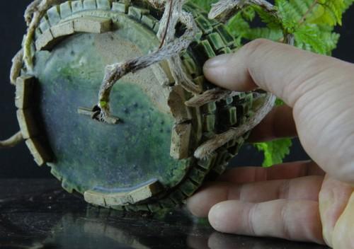 送料無料 トキワシノブ 常葉忍 緑釉変り鉢 (鉢の左右14cm)