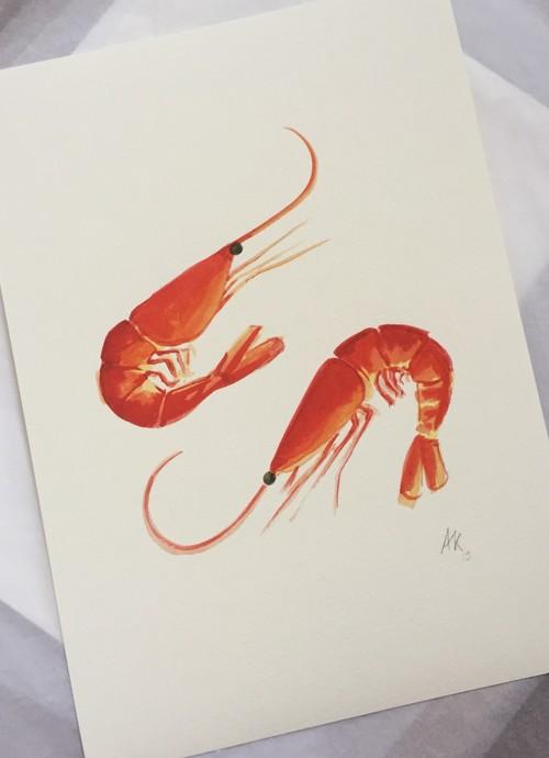 Prawns,  fine art print